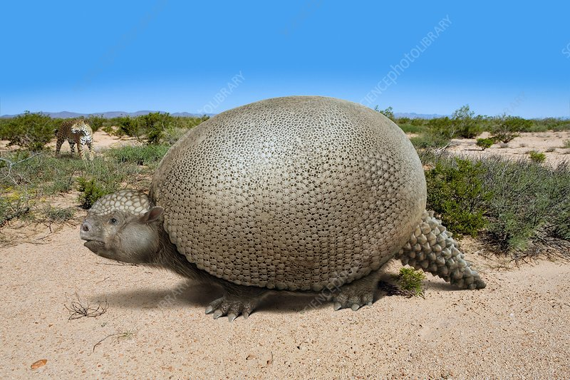 Glyptodon prehistoric armadillo, illustration