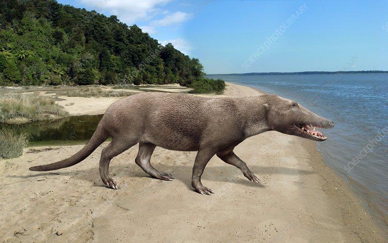 Pakicetus whale ancestor, illustration