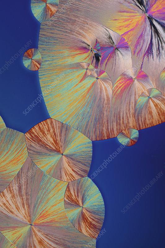 Dopamine crystals, light micrograph