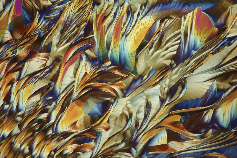 Alanine and glutamine crystals, light micrograph