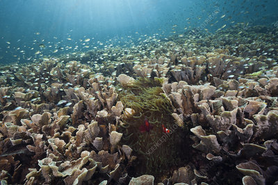 Hard coral colony