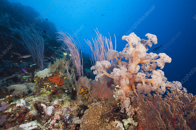 Species-rich coral reef