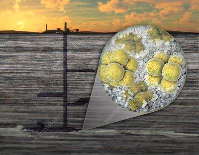 Salt extremophiles, illustration