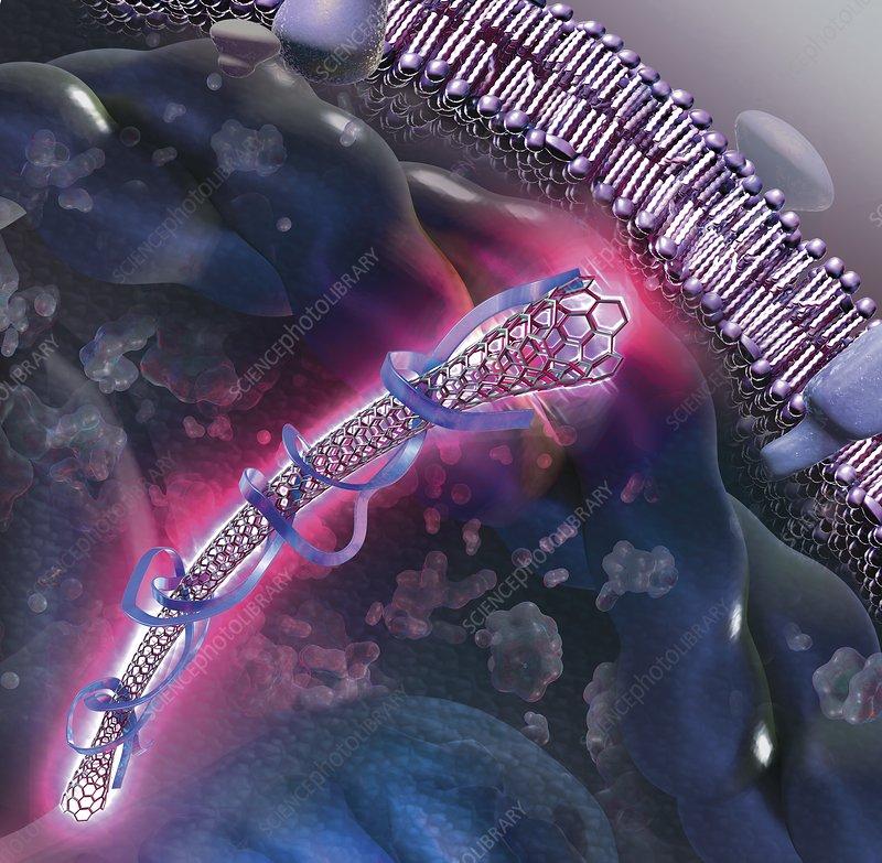 Nanotube inside a cell, illustration