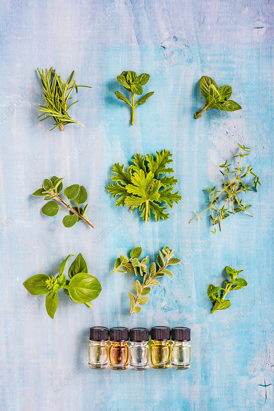 Assortment of herbs used for essential oils