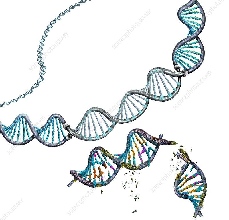 Genetic repair, conceptual illustration