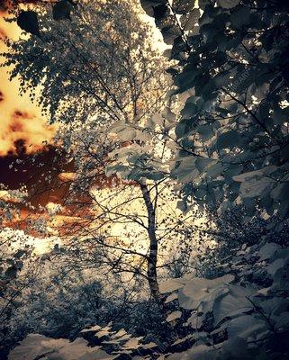 Woodland, infrared image