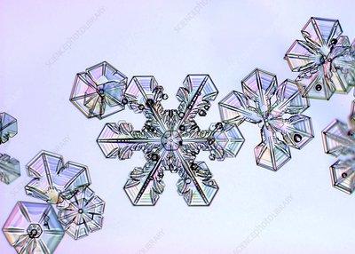 Snowflakes, light micrograph