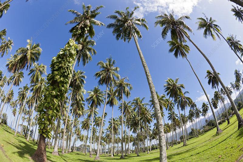South Coast of Tahiti, French Polynesia