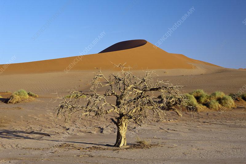 Big Mama Dune, Sossusvlei Area, Namib Naukluft Park, Namibia