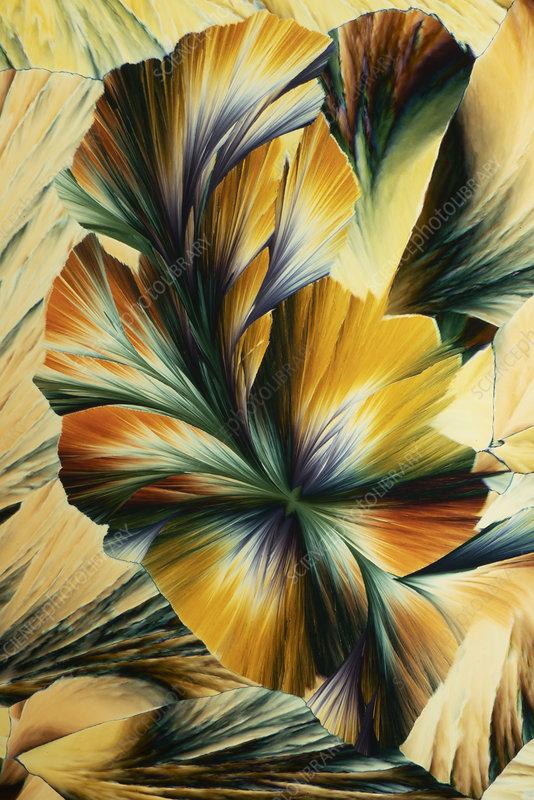 Magnesium sulphate, polarised light micrograph