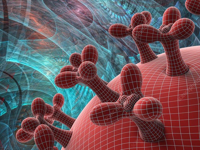 Coronavirus capsid detail, illustration