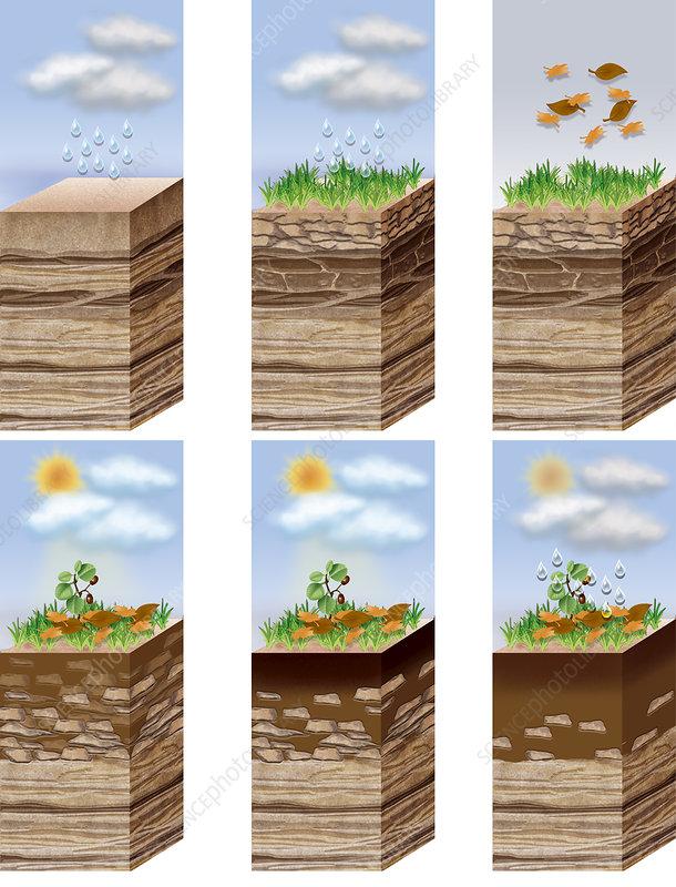 Soil formation illustration