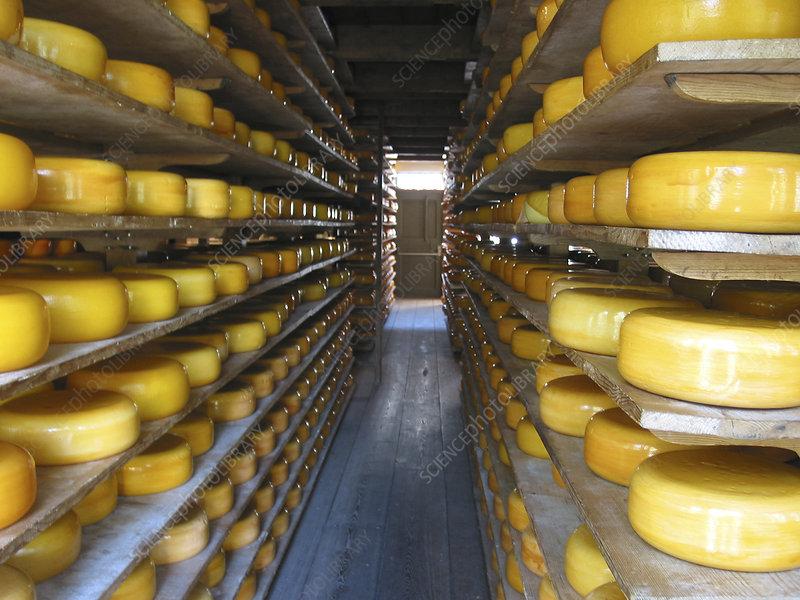 Maturing cheese