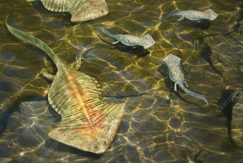 Diplocaulus prehistoric amphibian, illustration