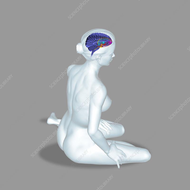 Brain reward pathway, illustration