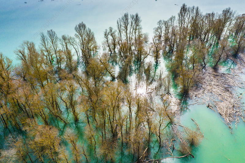 Waterlogged copse, aerial view