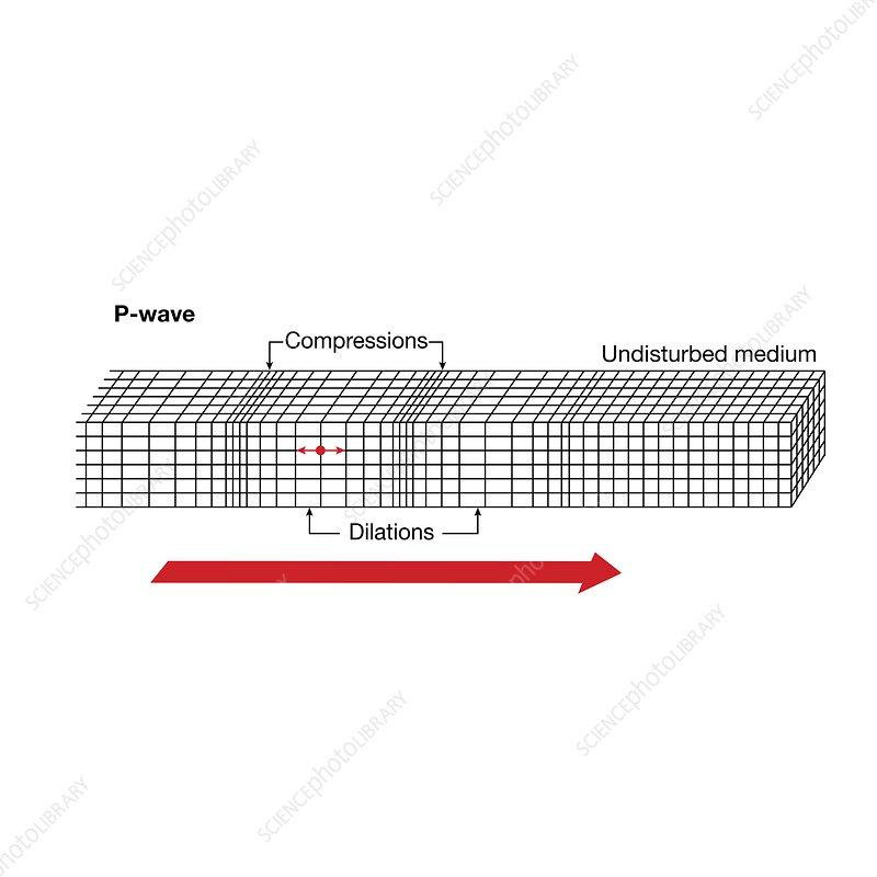 Seismic P-wave propagation, illustration
