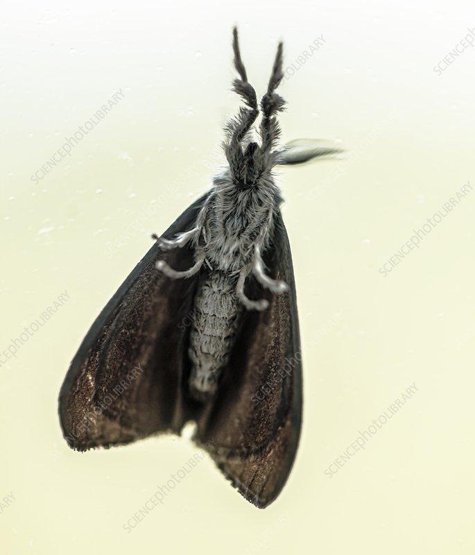 Underside of a moth