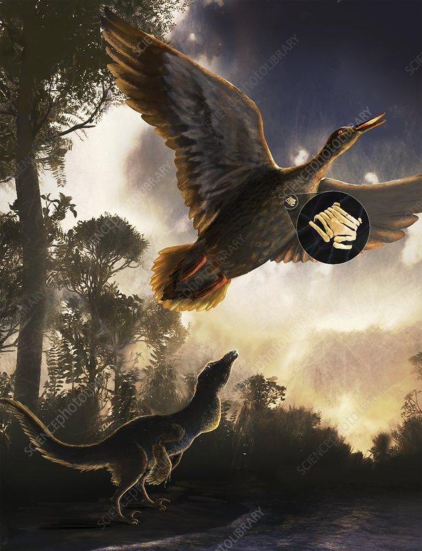 Vocal organ of prehistoric bird, illustration