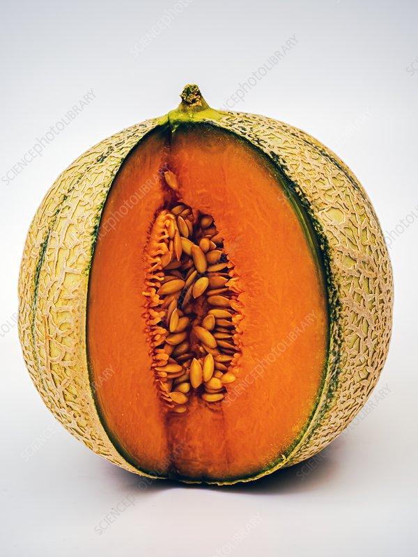 Cantaloupe melon showing seeds