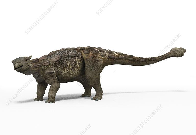 Ankylosaur dinosaur, illustration