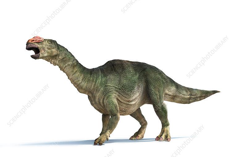 Muttaburrasaurus dinosaur, illustration