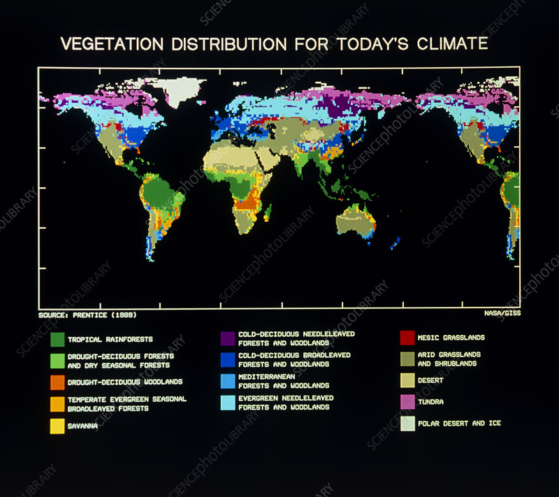 Computer map of World vegetation current climate