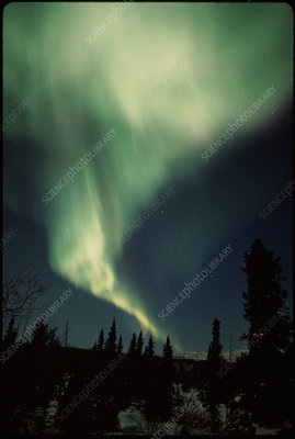 Aurora Borealis on Aurora Borealis Over Spruce Forest  Alaska   Stock Image E115 0175