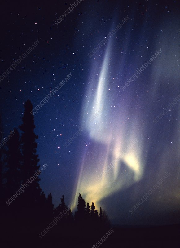 Aurora borealis or northern lights over a forest