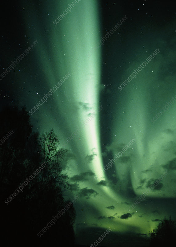 Aurora Borealis or northern lights, over trees