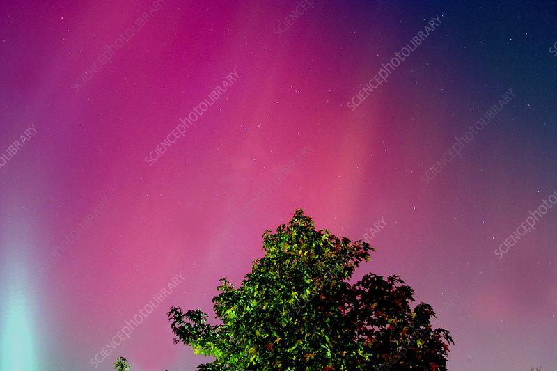 Jersey Aurora