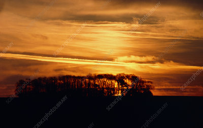 Cirrostratus clouds at sunset