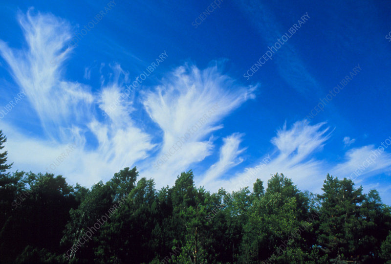 Plumes of cirrus cloud in the sky above trees