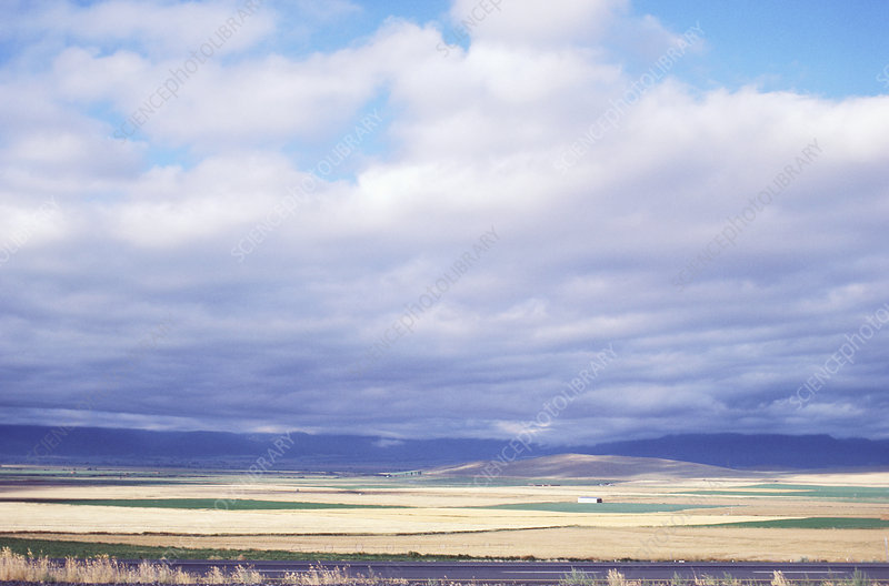 Stratus clouds over wheat field