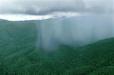 Tropical Rainstorm