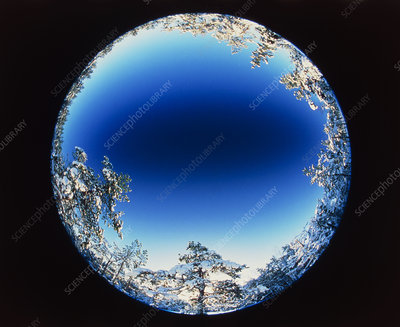 Circular fish-eye view of snowy trees & blue sky