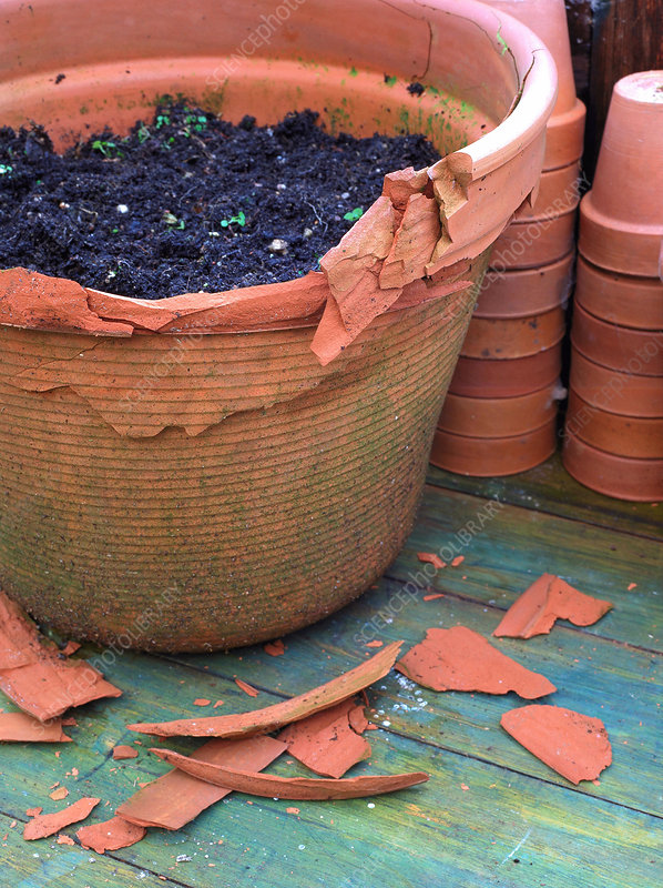 Frost damage to terracotta pot