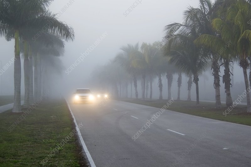 Road fog, Florida, USA