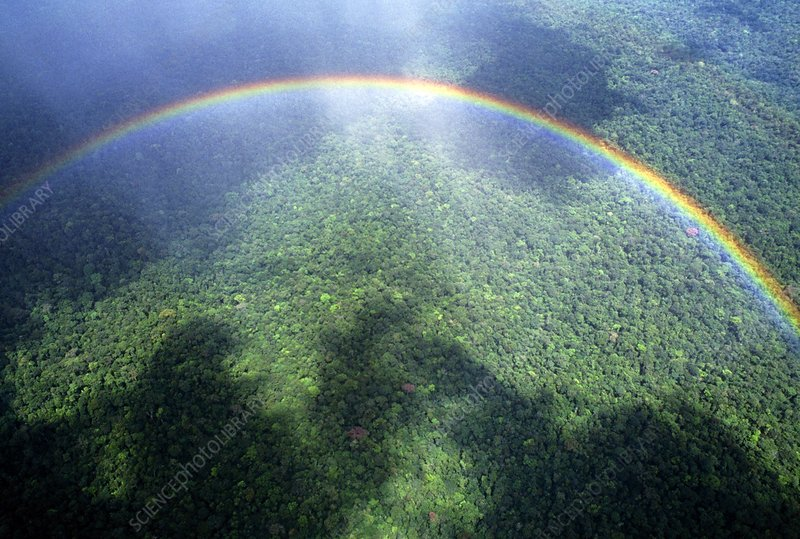 Aerial view of a rainbow over a forest