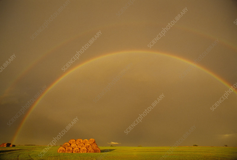 Double rainbow over a field of wheat