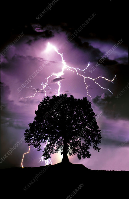 Lightning Hitting a Tree
