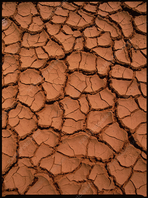Dried mud