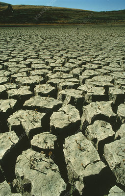 Drought-cracked mud