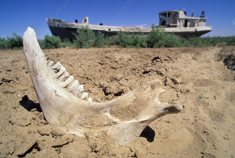 Drying of the Aral Sea, bones and ships