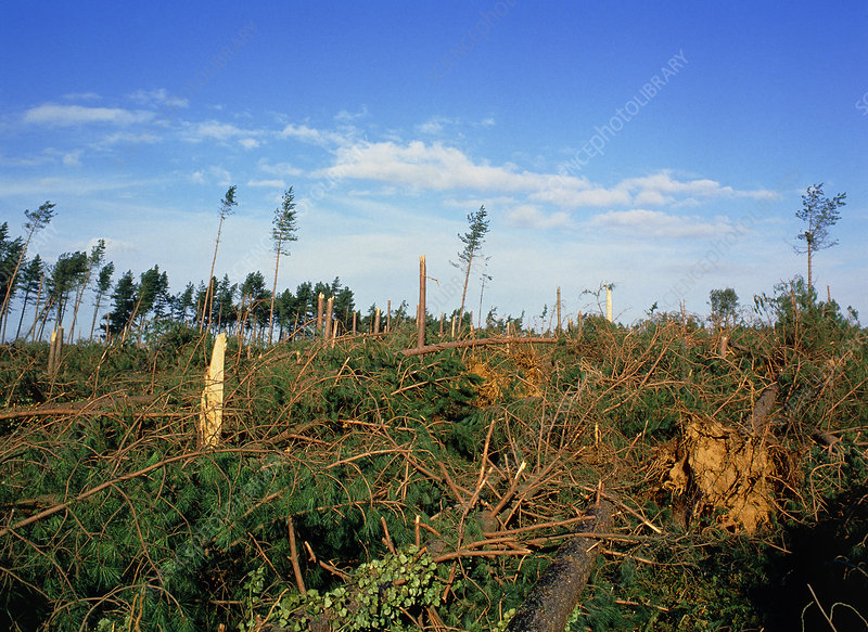 Hurricane damage to Rendlesham forest, England