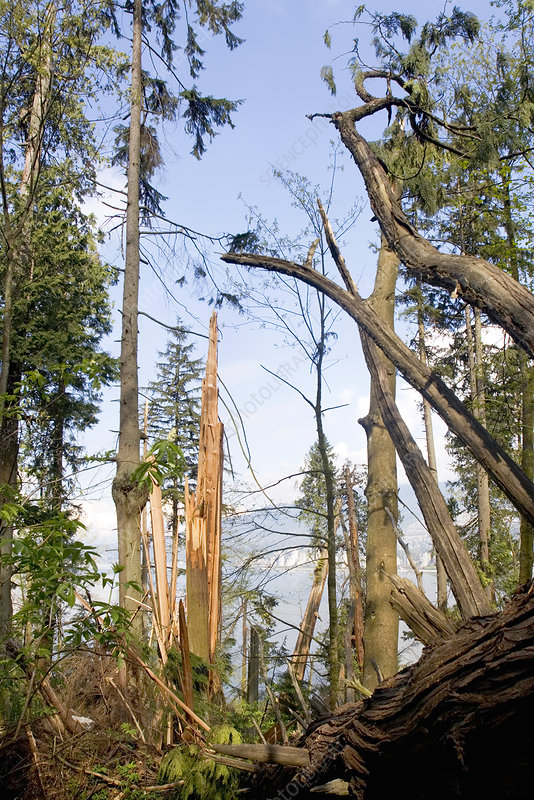 Storm damaged forest, Canada
