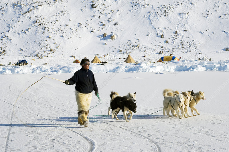 Inuit with dogs