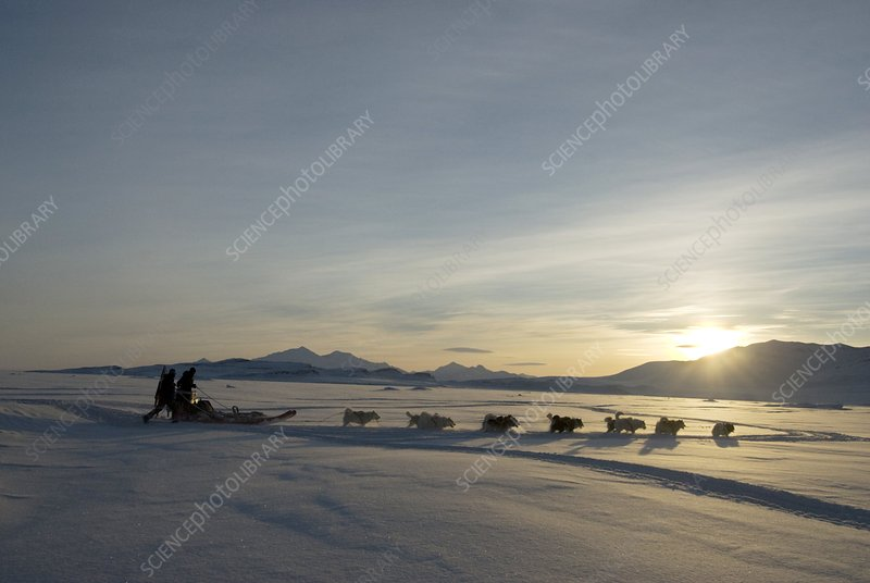 Dogsledge, Northern Greenland