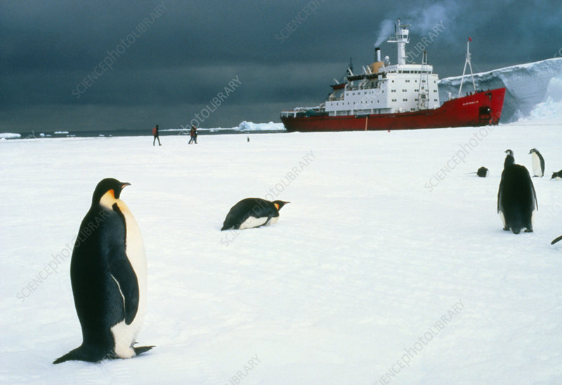 Emperor penguins on sea-ice, Antarctica